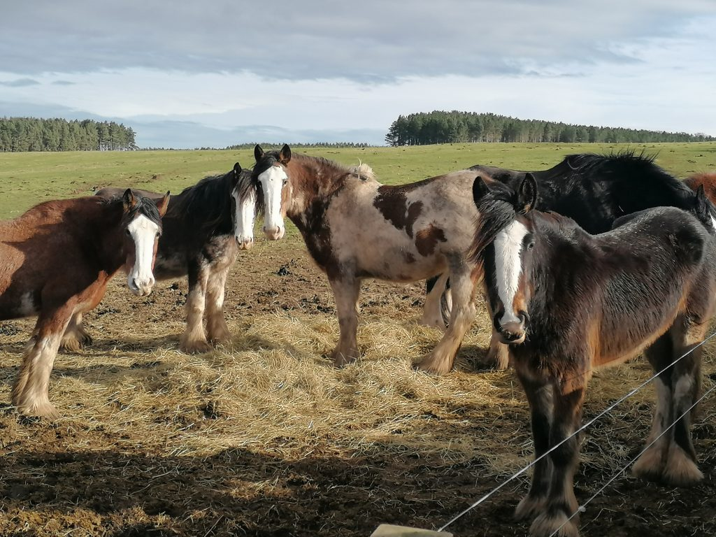 The neighbours at the Hay Farm Heavy Horse Centre